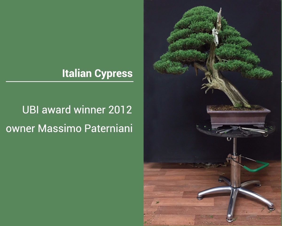 bonsai-iatalian-cypress