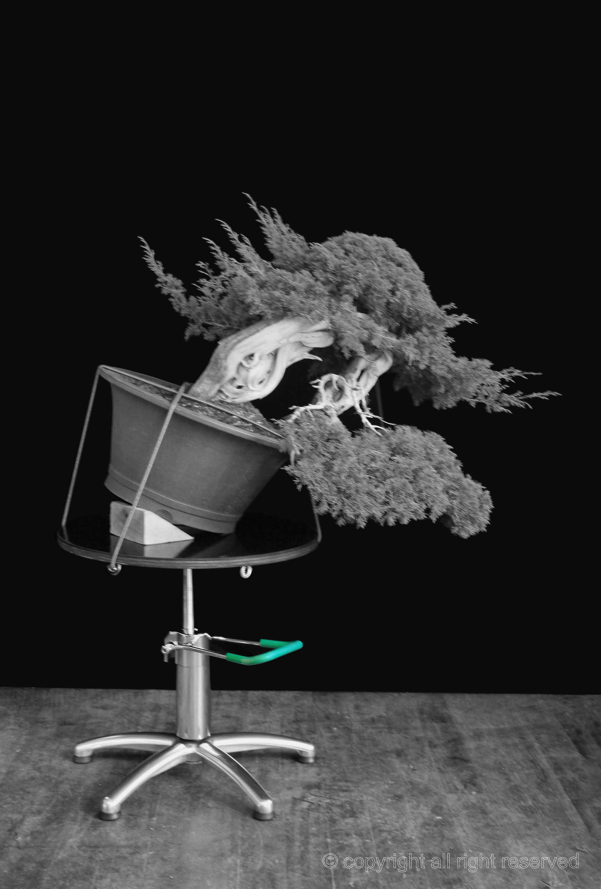Bonsai Turntable_7
