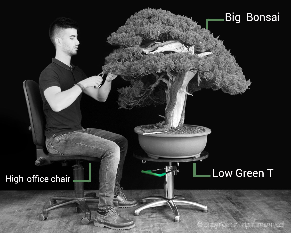 Green_T-Turn_table_bonsai_big